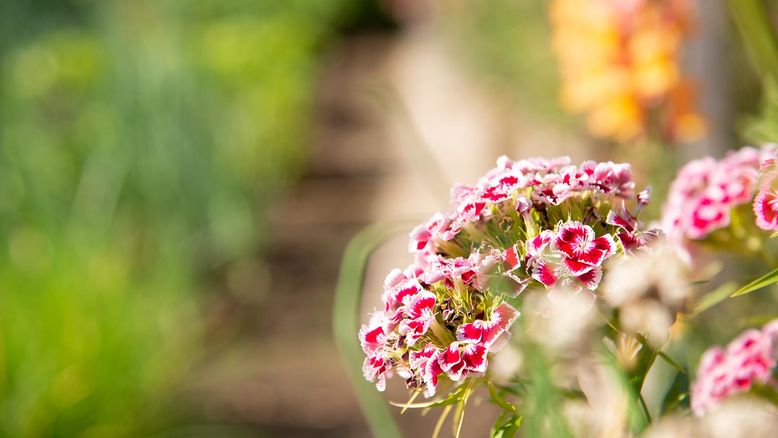 Detailed view of some red and white flowers