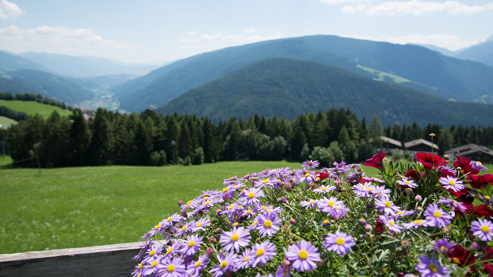View of the hills around Meransen from the balcony of the Pensione Wiesenrain with flowers in the foreground